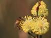 bardsey flower