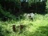 apiary_3