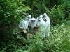 apiary_4