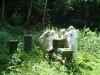 apiary_5