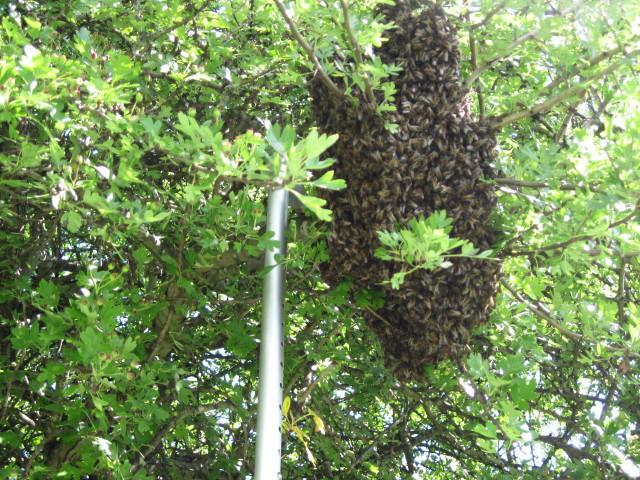 swarm-july-2011